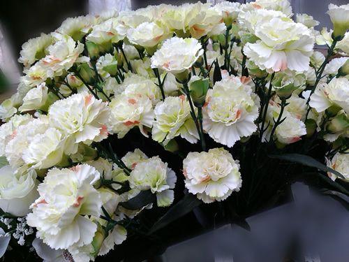 langage des fleurs - oeillet blanc - esthétique homme