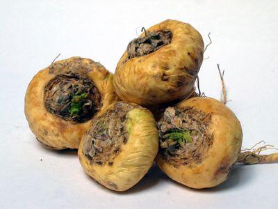 Plante aphrodisiaque - maca